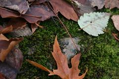 Leafy, Mossy Rock