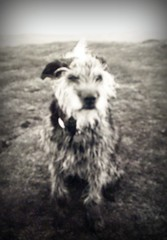 Bede, Dad's Old Dog... by meg price