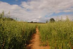 Wandered through a field....