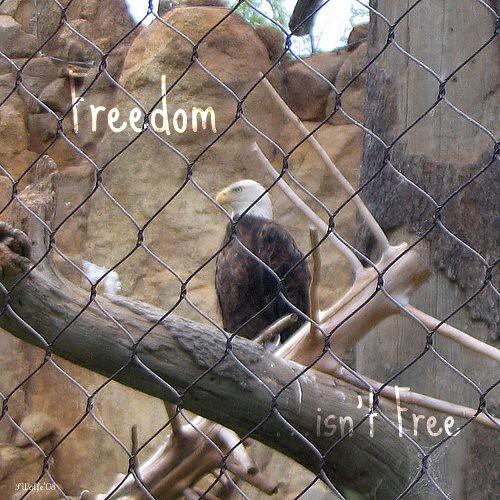 Bald Eagle Zoo