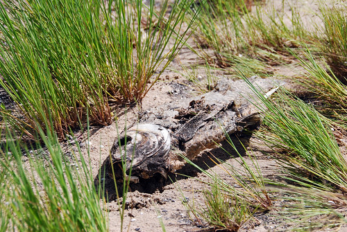 Peces muertos devorados por las gaviotas en el lago de Colac