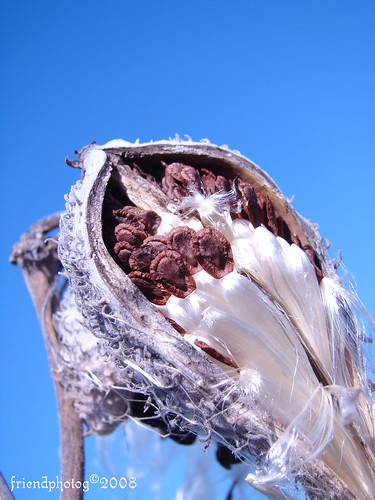 Cotton 7 - sig