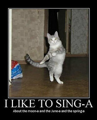 funny_cats_a_025