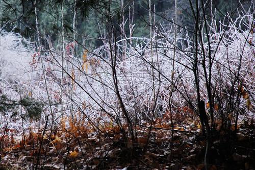 December Ice Storm 8
