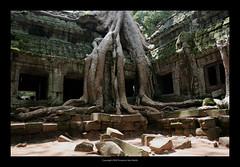 Ta Prohm Temple, Cambodia  405