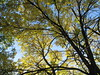 End Of Fall, Minneapolis, Minnesota, October 2008, photo © 2008 by QuoinMonkey. All rights reserved.