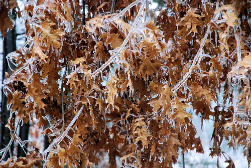 December Ice Storm 6