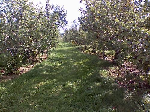 apple row