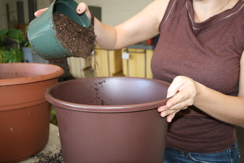 Add soil to the new pot