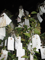 Dying Wishing Tree