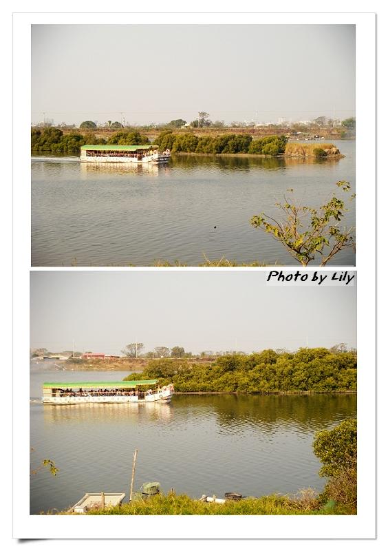 四草湖生態船。