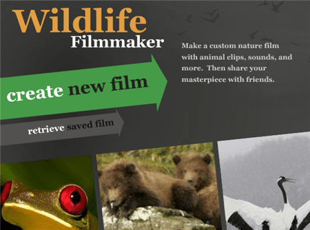 Wildlife Filmmaker