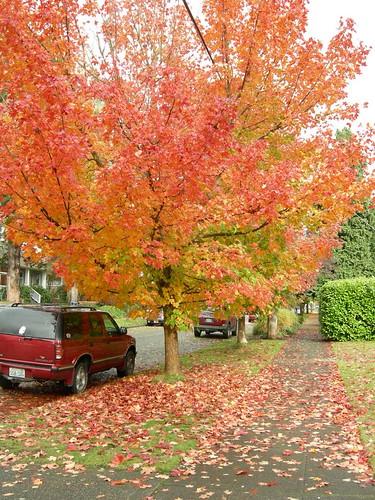 Flaming Fall Tree