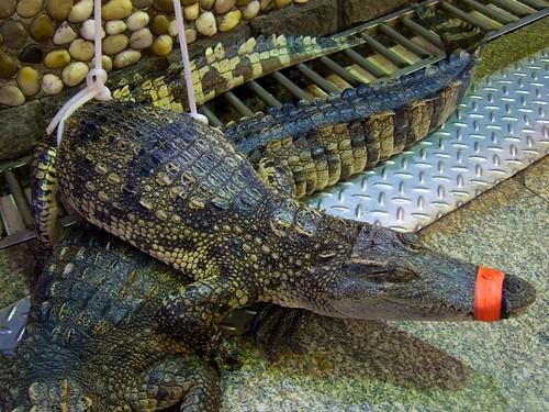 Pity Crocs 2
