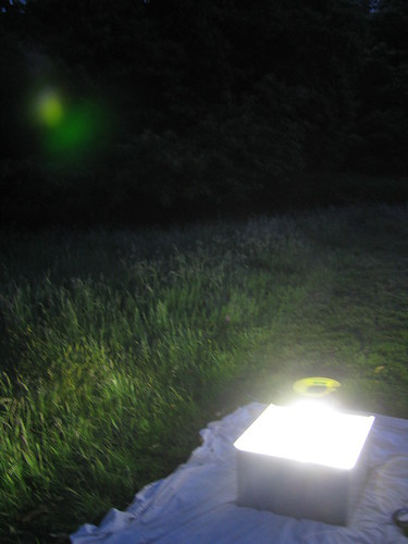 A light trap was used to attract moths