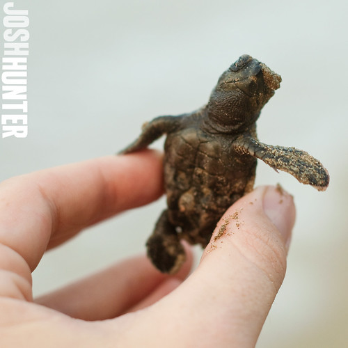 That's Right. I'm Holding a Baby Sea Turtle.