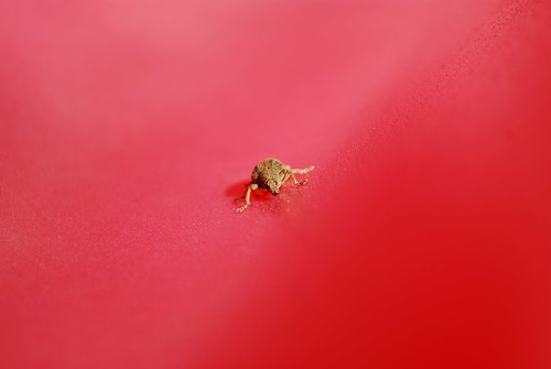 name that bug