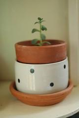 ceramics-207