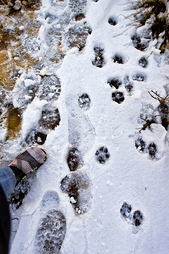 I kept telling Jeff and Esten that these were mountain lion pawprints, just to freak them out. It worked a little, I think, especially since I filled them in on the cats ninja-like stalking ability, utter stealth and utter death-rendering abilities. In reality, though, Im pretty sure these are dog pawprints.