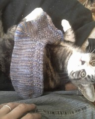 Cordelia and my sock