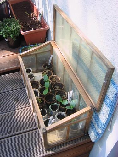Balcony-sized greenhouse