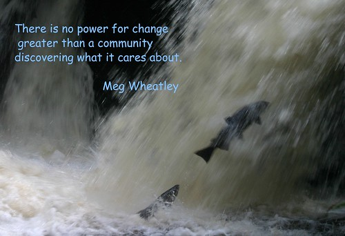 salmon leaping/Meg Wheatley quote