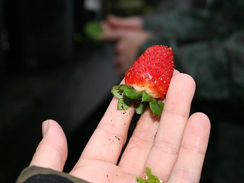Palmarosa-Strawberry