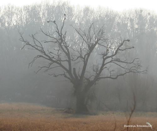 Lobau Jänner 2009