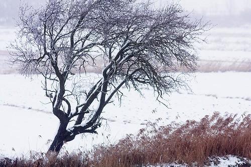 Árbol semiabatido