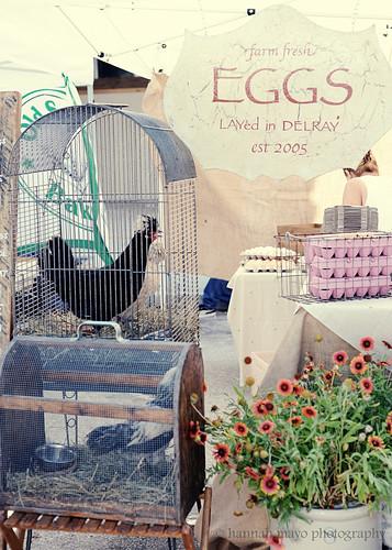 Green Market- Farm Fresh Eggs