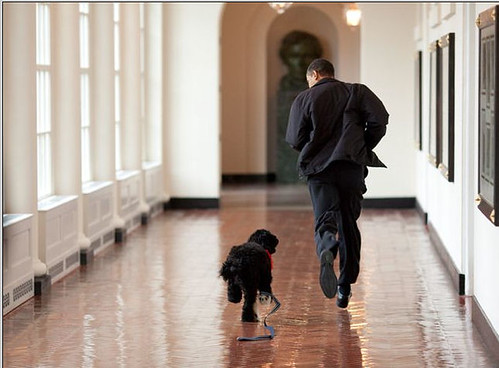 obama running along White House corridor with new puppy