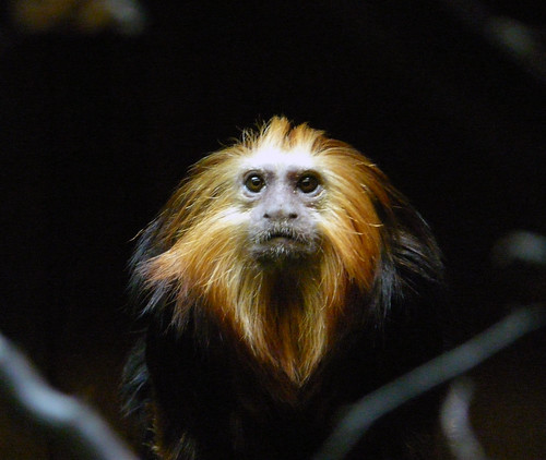 London Zoo marmoset