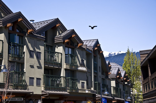 An eagle soars past the Village of Whistler!