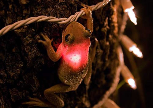 tree frog lit up like a christmas light