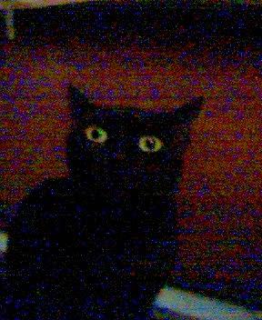 My cat, spooky