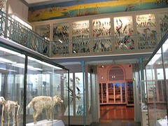 Lilles Natural History Museum