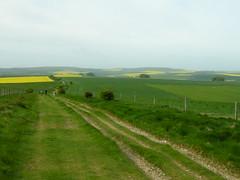 The Ridgeway at Avebury Down