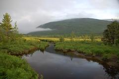Acadia Meadow