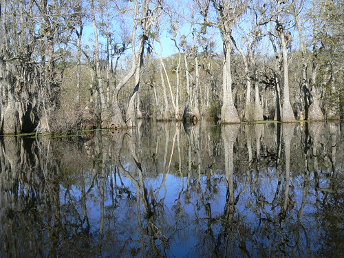 Merchant's Millpond Canoeing - Reflections