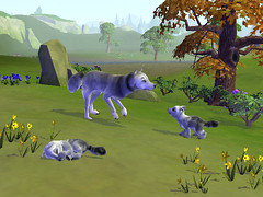wolffamily