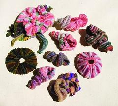 seashell_collection
