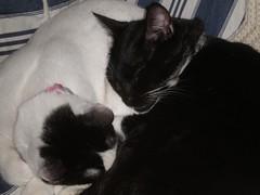 Ollie and Bonnie