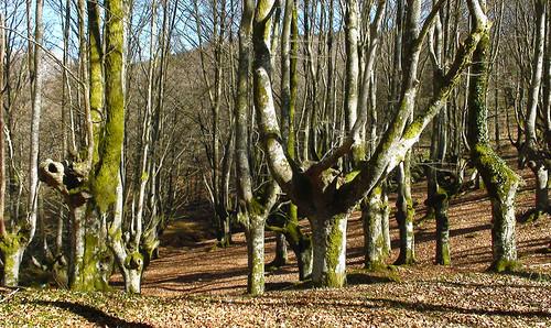 Parque+natural+de+Urkiola