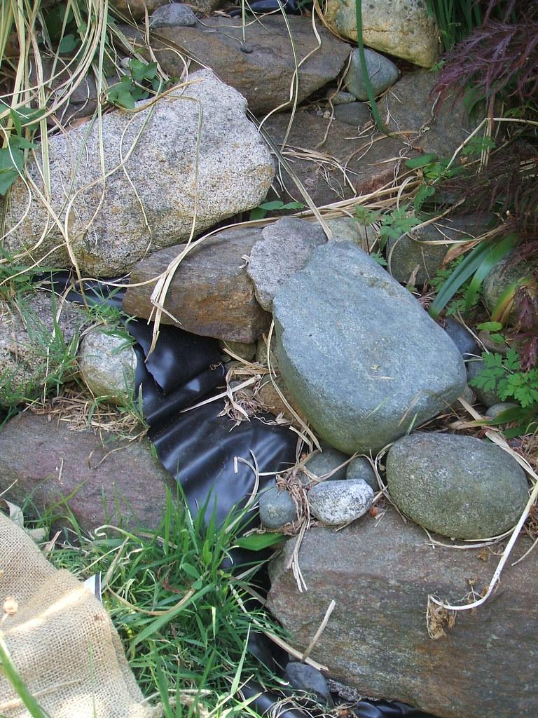 Rockery rearranged by raccoons?