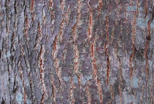 Wood Texture 03