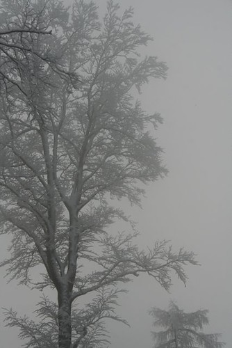 snowy trees - 6.jpg