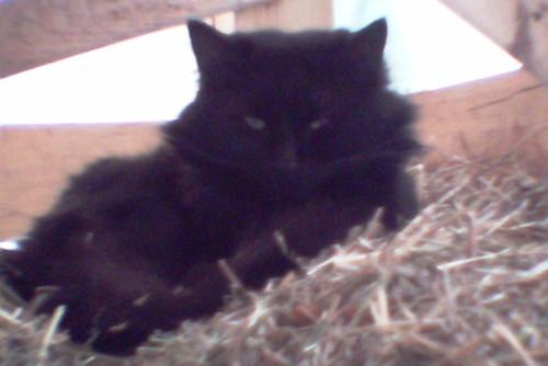 Farm Cat by Sophia - Little Tikes Camera
