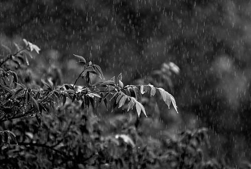 Wet & Dark