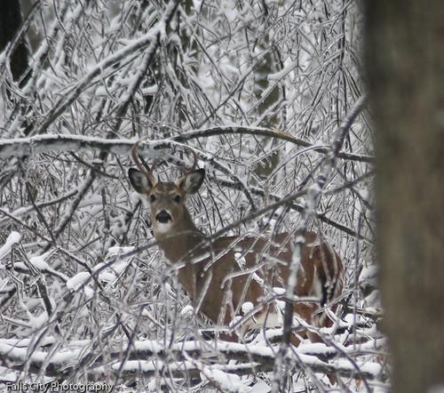 029/365 Oh Deer