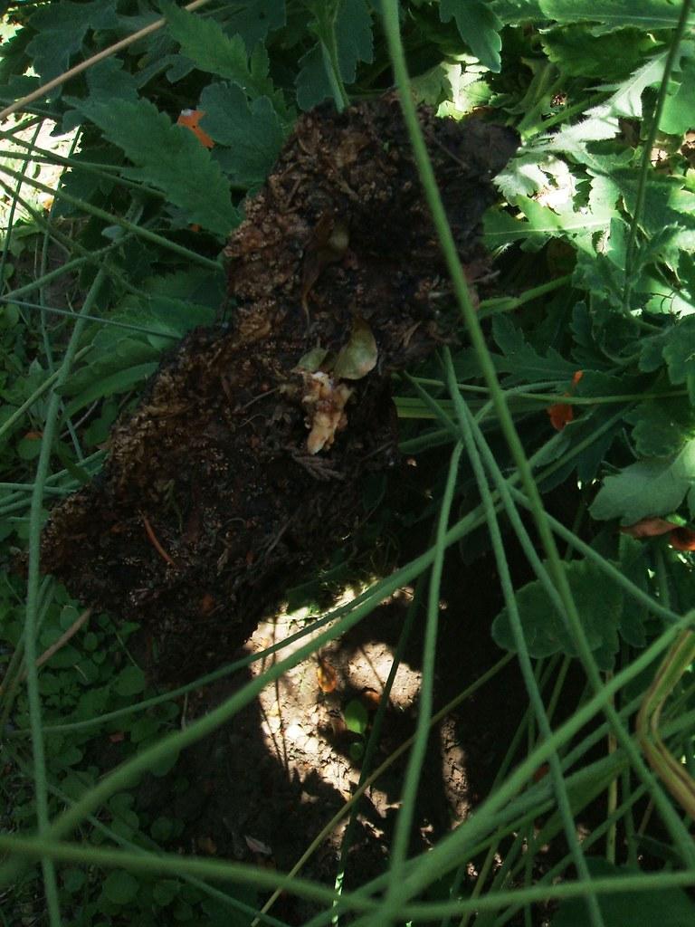 Strange bark piece left in garden